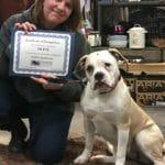 Olive Puppy Graduate Class